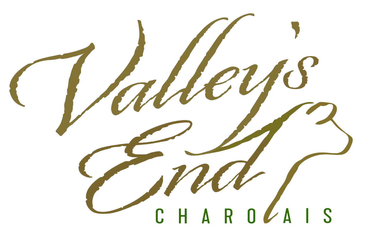 Valley's End Charolais